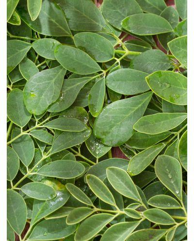 Moringablätter Bio